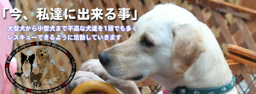 NPO法人 Wonderful Dogs